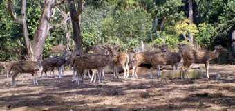 sipahijola-wildlife-sanctuary