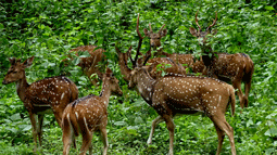 Bhimashankar Wildlife Sanctuary